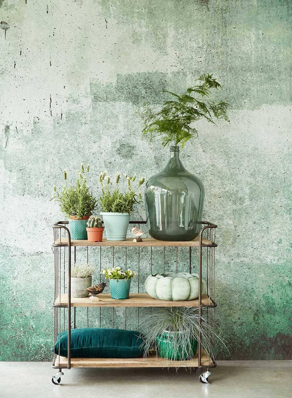 Composition décorative avec plantes sur mur vert de gris - Decorazine.fr